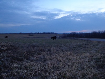 cattle ranch wisconsin