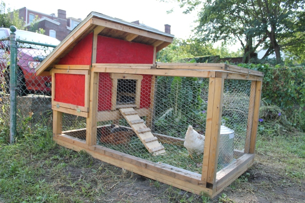 city chickens coop design pittsburgh