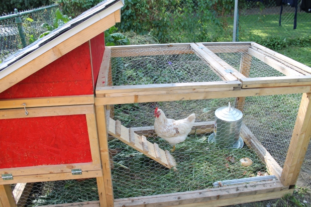 chicken coop urban agriculture