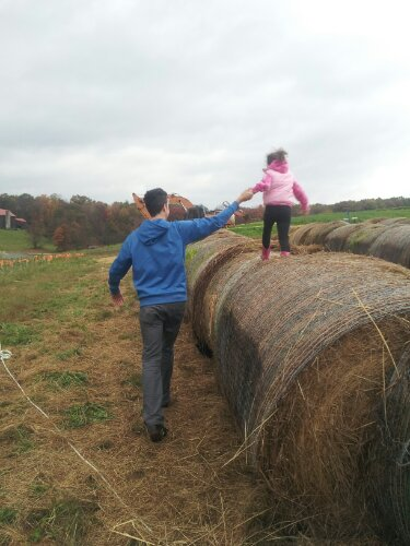 running the hay bales